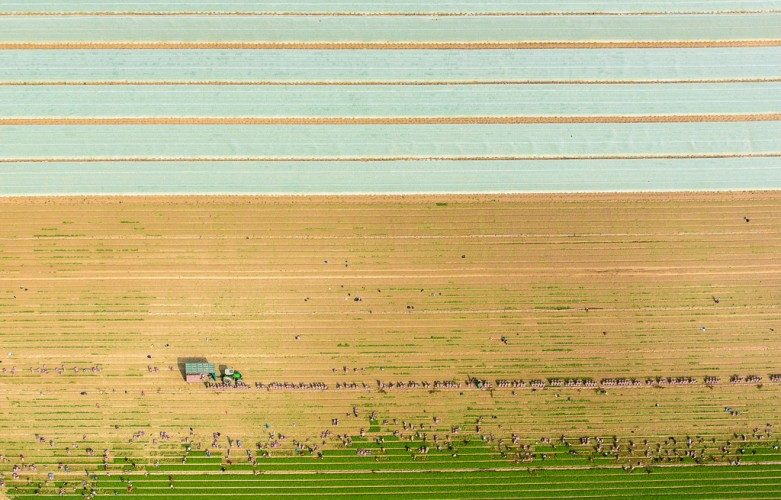 Aerial Agriculture-18